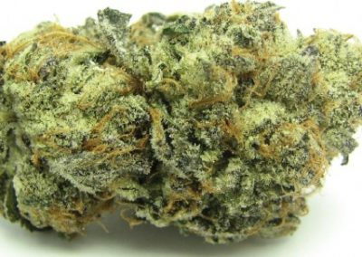 GIRL SCOUT COOKIES THC 28% 60% INDICA/40% SATIVA